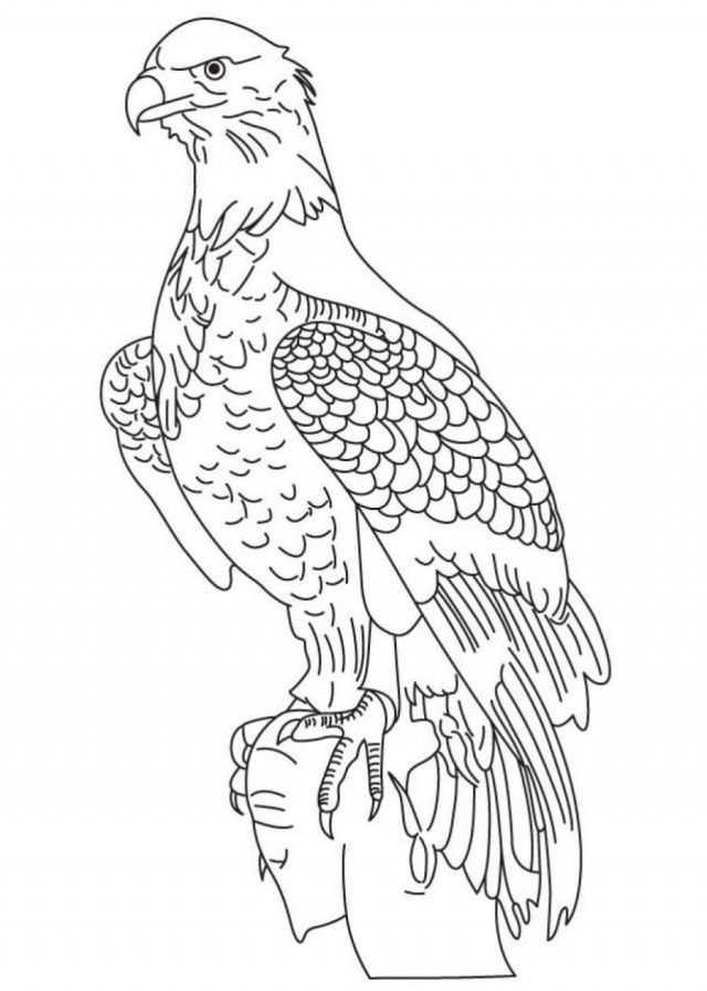 Printable Coloring Pages Of Bald Eagle