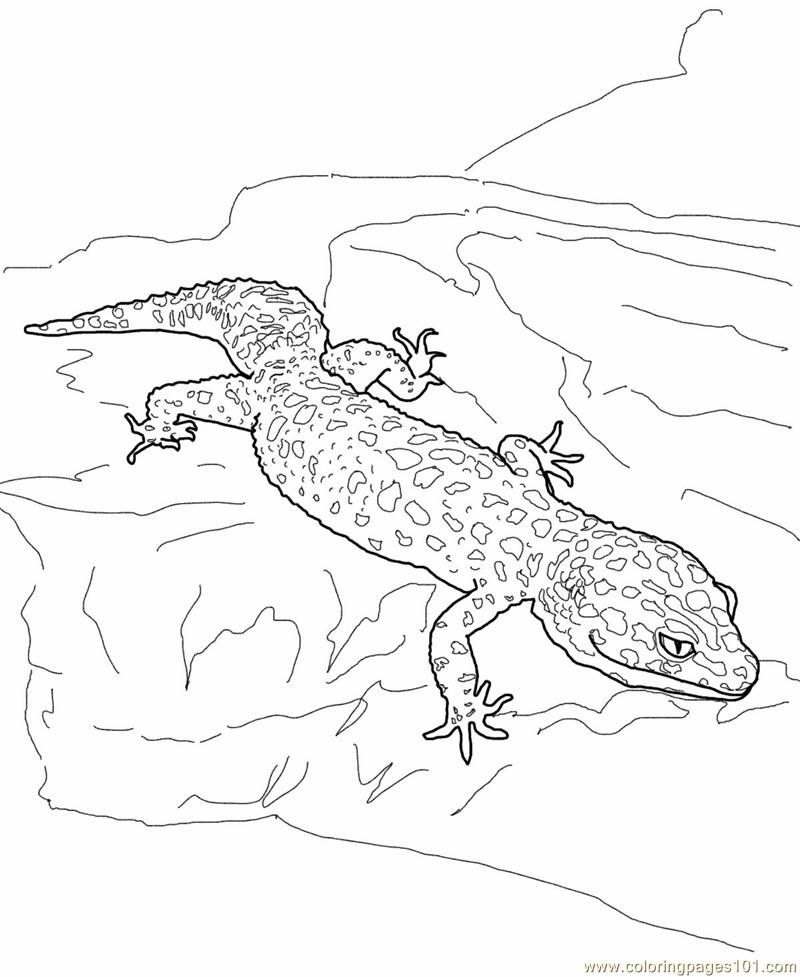 Coloring Pages Of Lizards Coloring Home