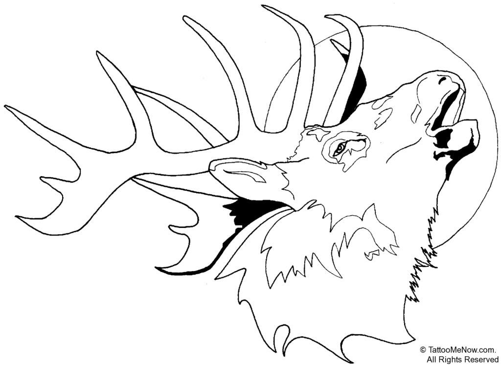 white tailed deer coloring pages - photo#34