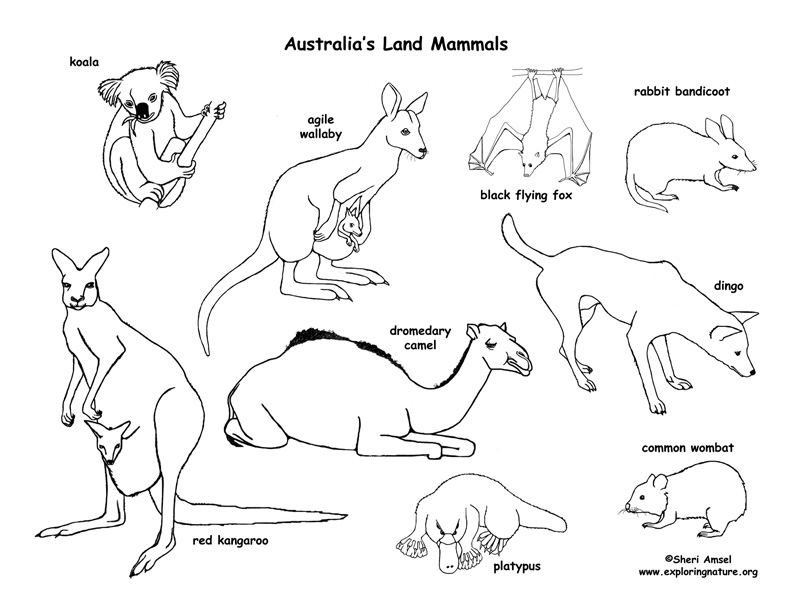 coloring pages australian animals - photo#8