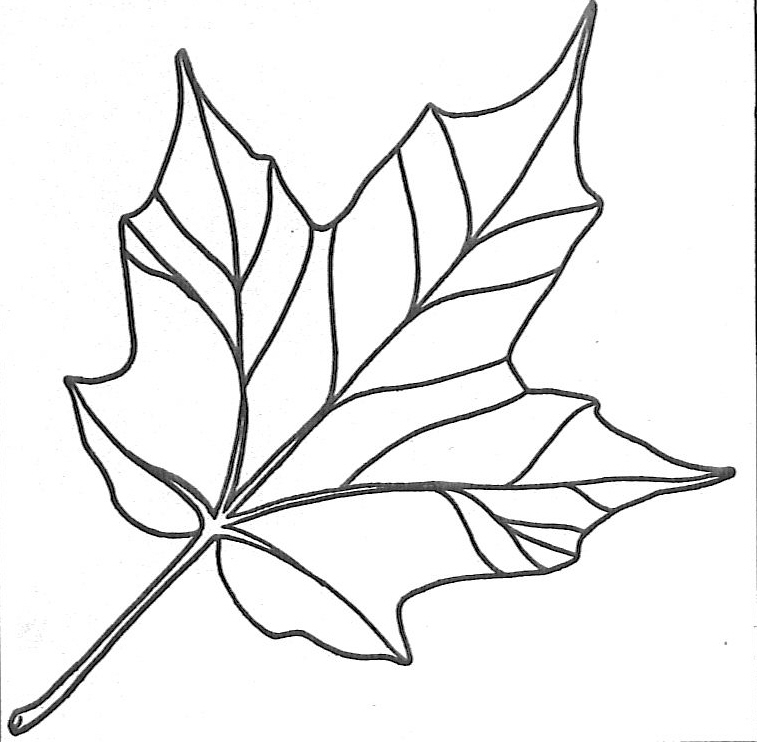fall leaf outline az coloring pages