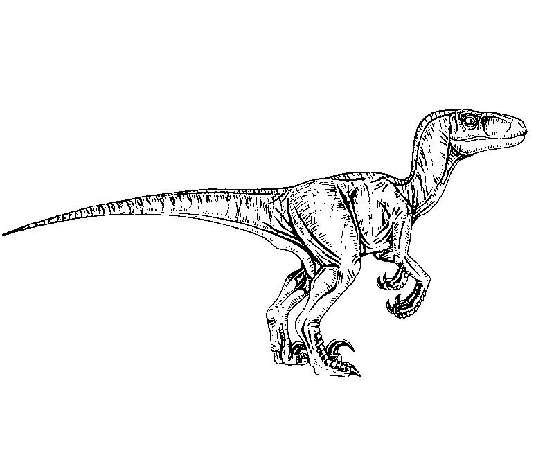 13 Jurassic Park Coloring Page