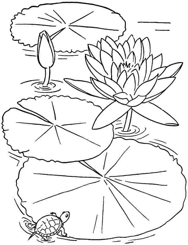 Free Colouring Sheets Lotus Flowers For Kids #