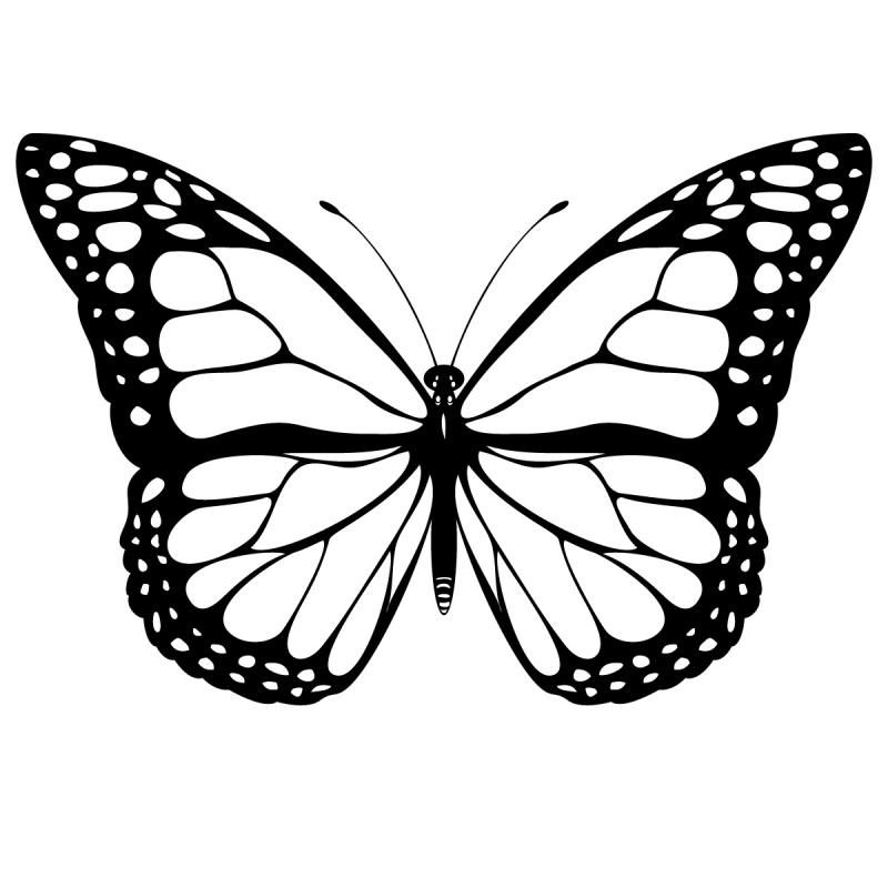 Butterfly Coloring Pages and Book | UniqueColoringPages