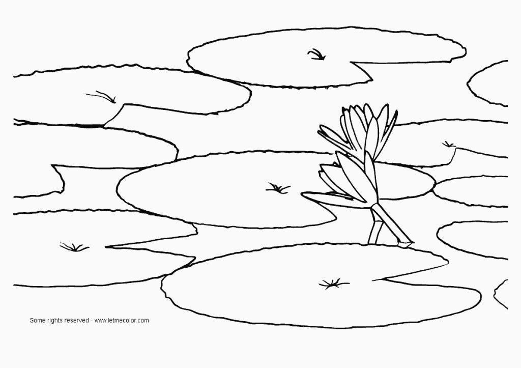 Free Coloring Pages Of Frog Lilypad Lilypad Colouring Pages Page