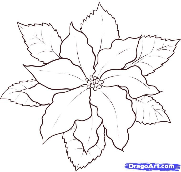 pointsettas coloring pages - photo#10