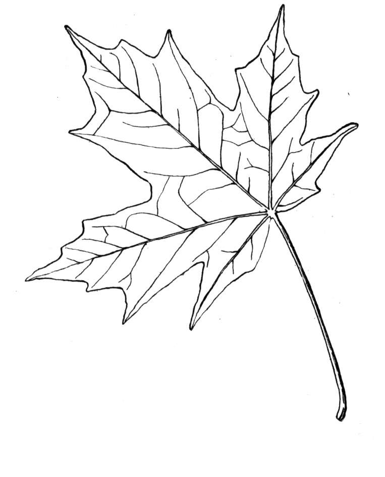 Maple Leaf Coloring Page Coloring Home Maple Leaf Coloring