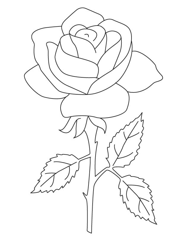 The National Flower Rose | Download Free The National ...