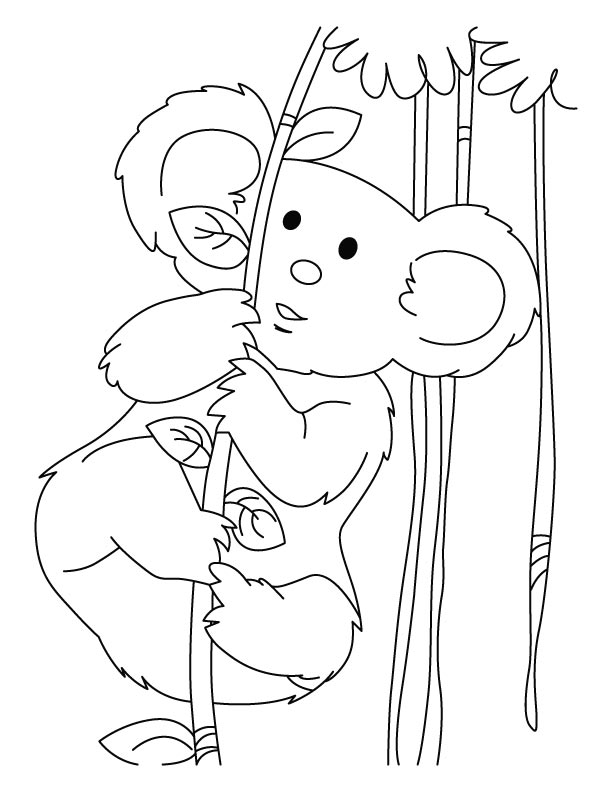 Koala full of energy coloring pages | Download Free Koala full of