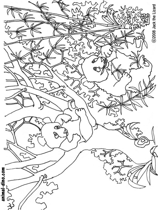 giant panda coloring pages - photo#26