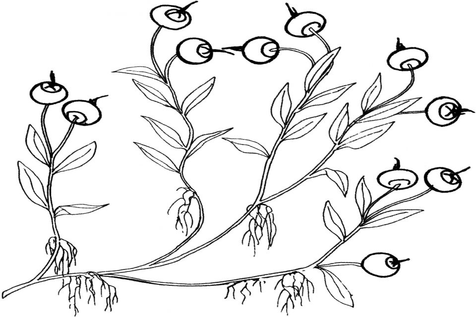 Pics Of Berries Az Coloring Pages Still Coloring Pages