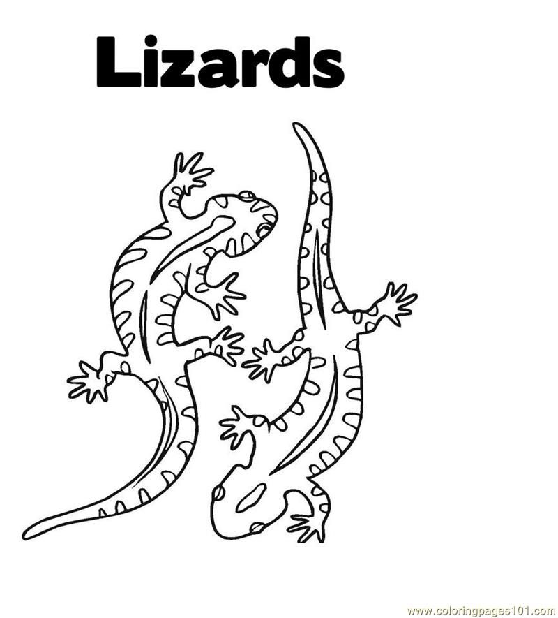 Reptile Pictures For Kids