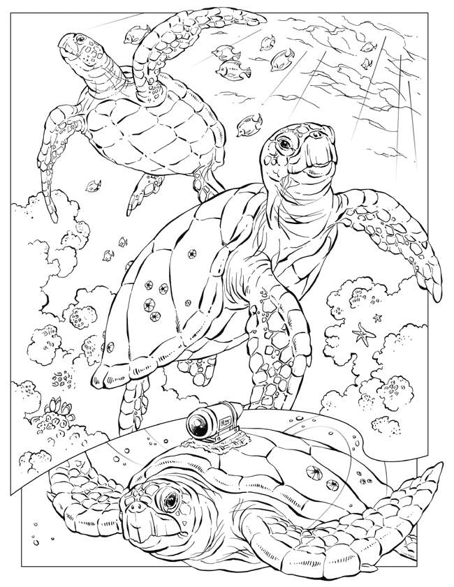 Ocean Coloring Pages For Adults Coloring Home