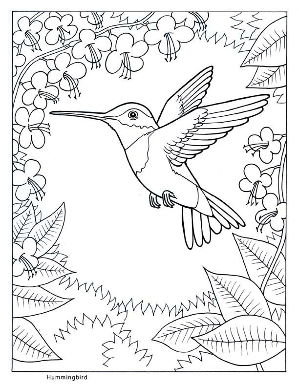 humming bird printable coloring pages - photo#18