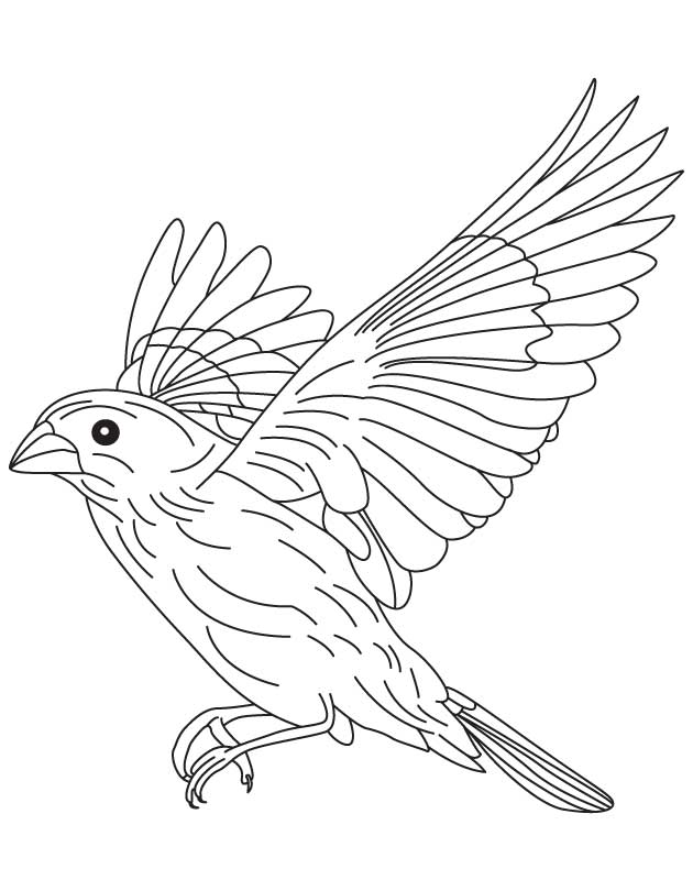 canary bird coloring pages - photo#33