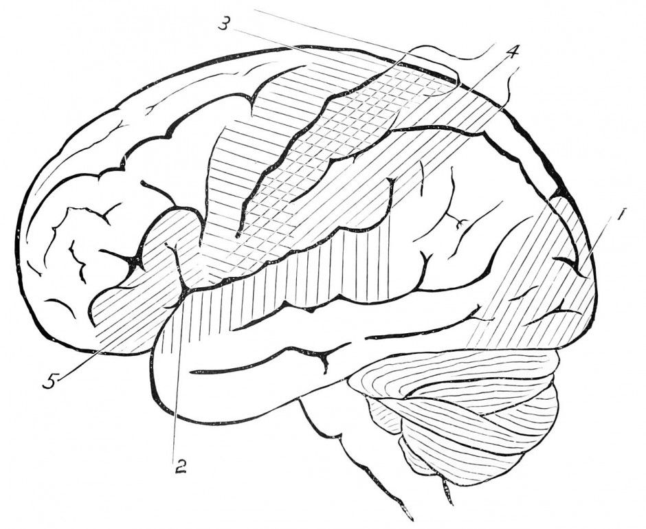 Human Brain Coloring Pages Coloring Home