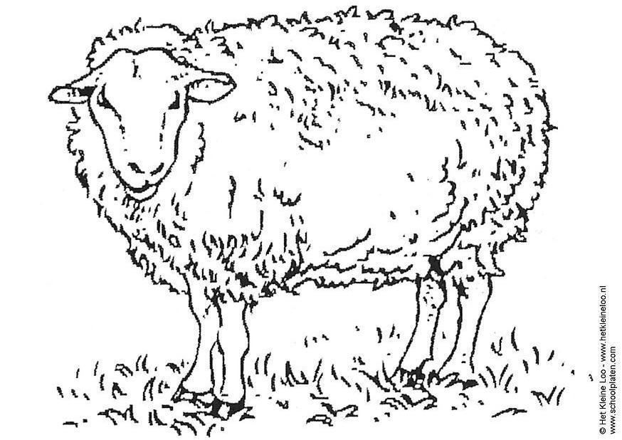 Free Baa Baa Black Sheep Printable Coloring Pages Baa Baa Black Sheep Coloring Page