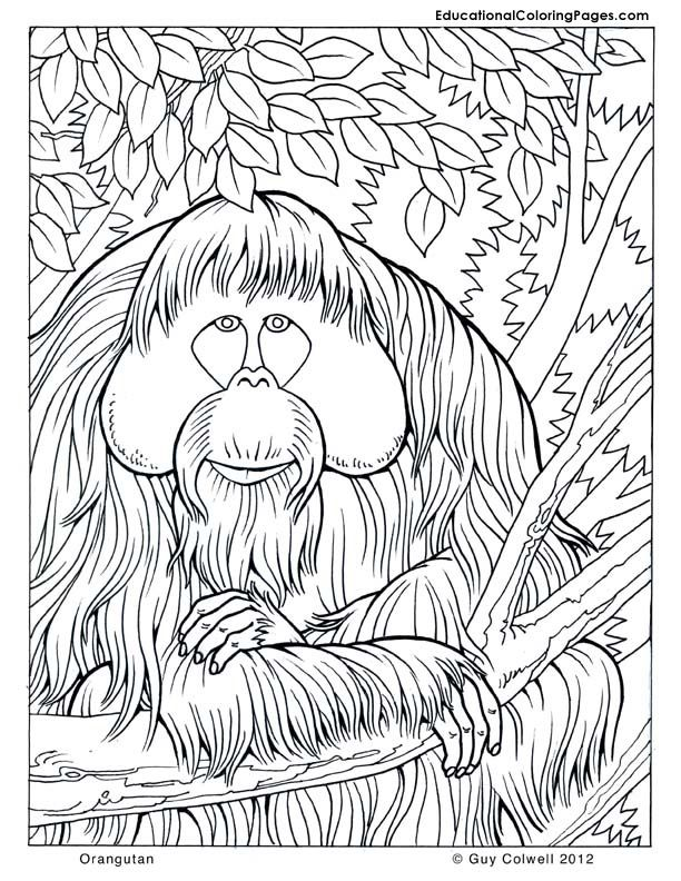 Orangutan Printable Coloring Pages