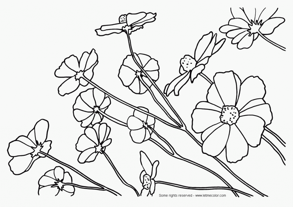 Free Printable Coloring Pages For Adults Nature : Nature coloring pages for adults home