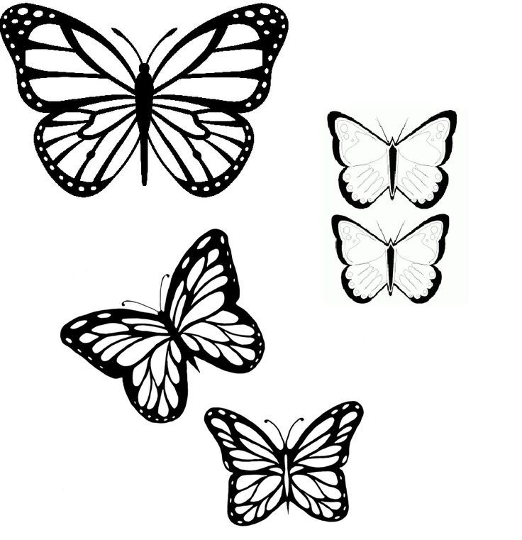 butterfly outlines coloring home. Black Bedroom Furniture Sets. Home Design Ideas
