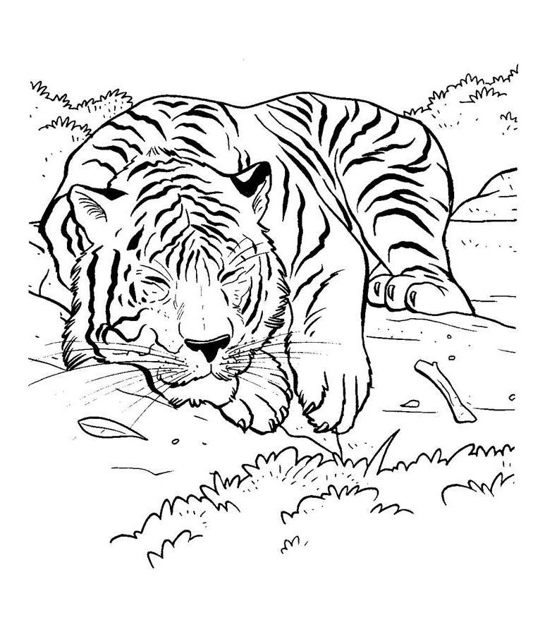 free realstic coloring pages - photo#29