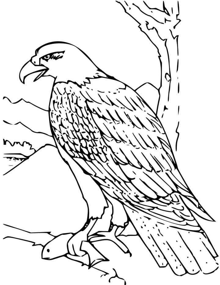 - Bald Eagle Coloring - Coloring Home