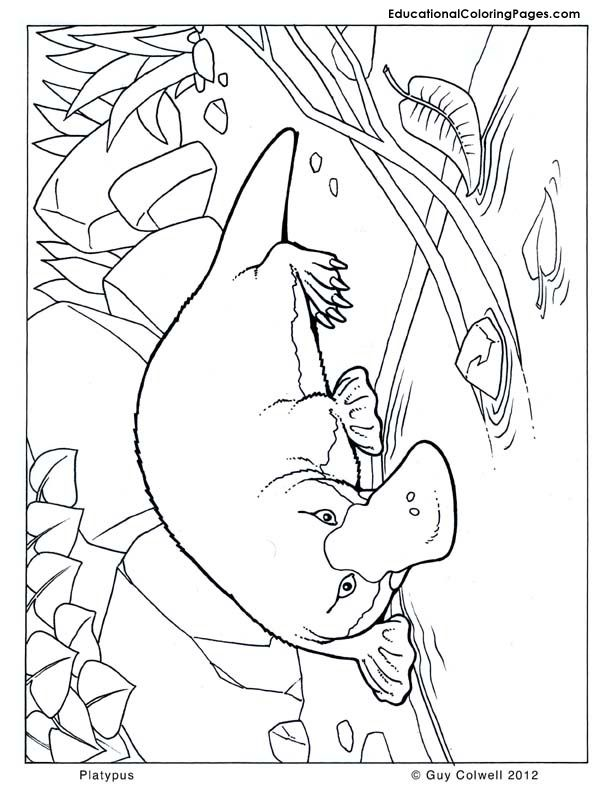 It is an image of Epic Platypus Coloring Pages