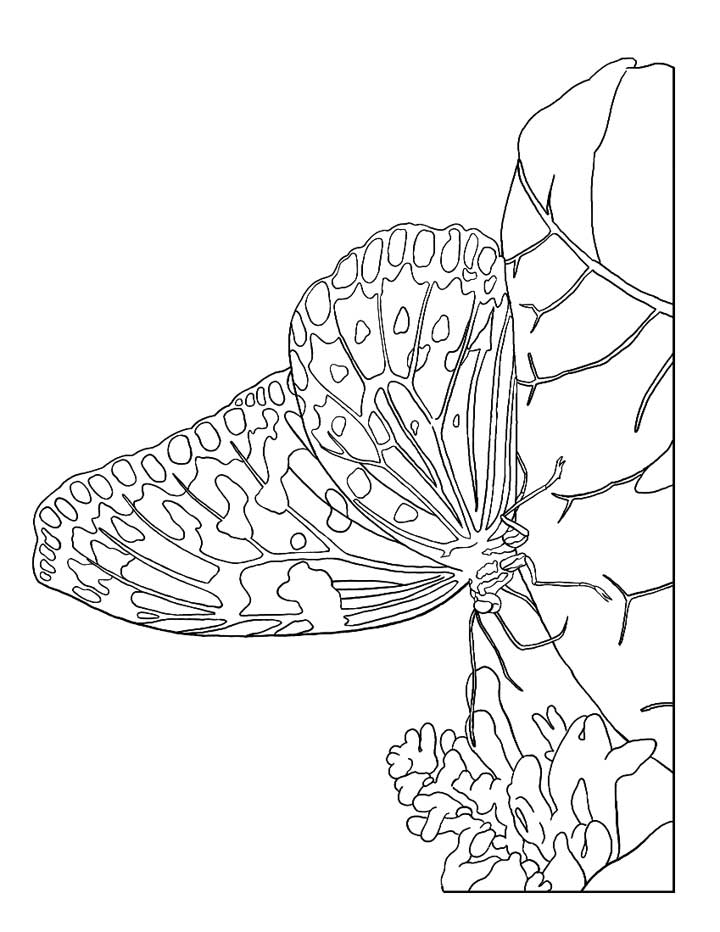 Cpb Zxmi moreover Christmas Tree Coloring Pages For Adults together with Rilgkeri besides Coloriage Perroquet Ara Dl further Owl Coloring Pages For Adults. on detailed coloring pages for adults