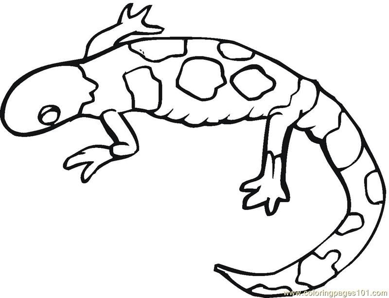 Gecko Coloring Pages Coloring Home