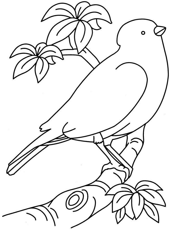 Cartoon Birds Nest AZ Coloring
