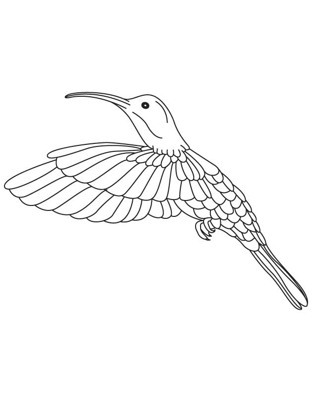 Free Hummingbird Pictures Coloring