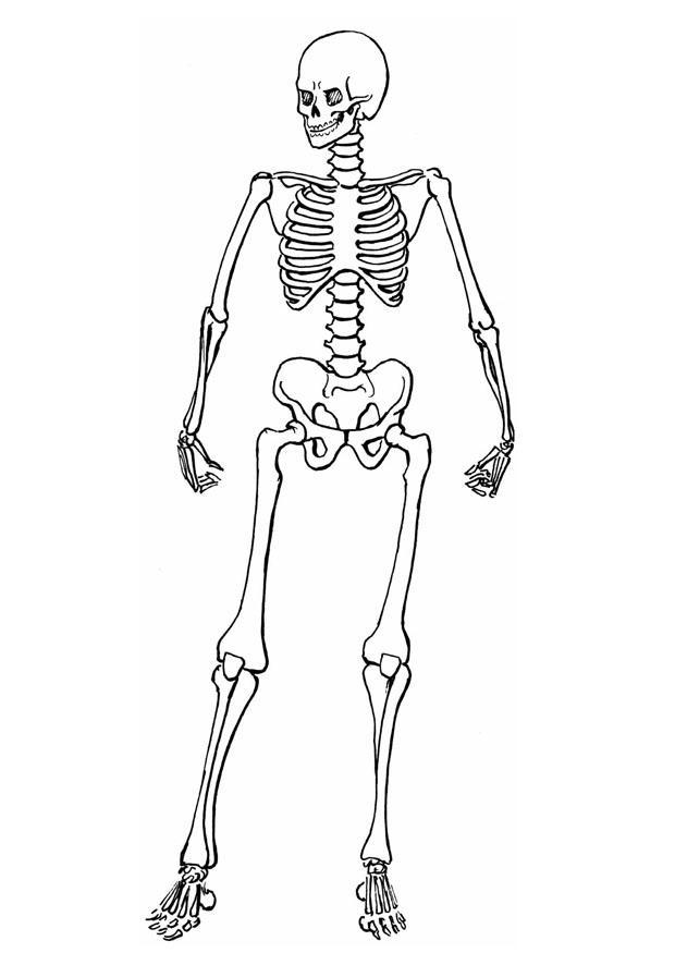 bones coloring pages - photo#24