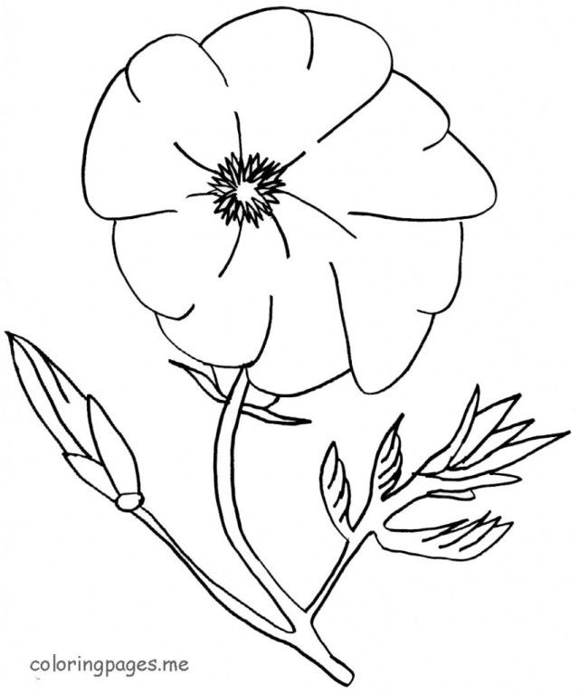 Poppy coloring page pdf coloring pages for Poppy coloring page