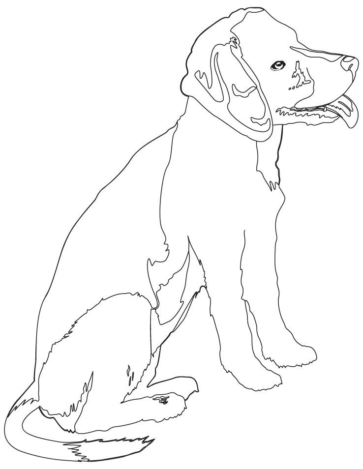 beagle puppy coloring page | Download Free beagle puppy coloring