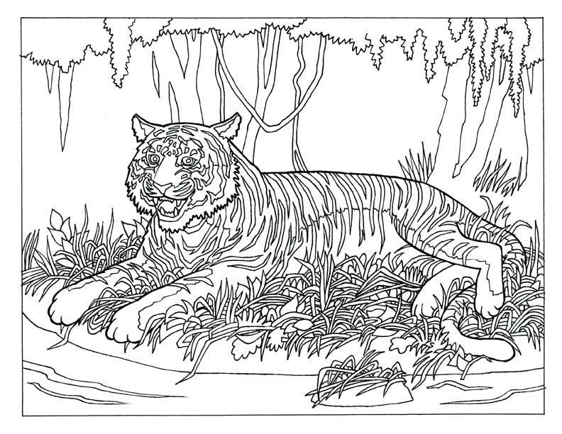 coloring pages of animals hard - free difficult coloring pages coloring home