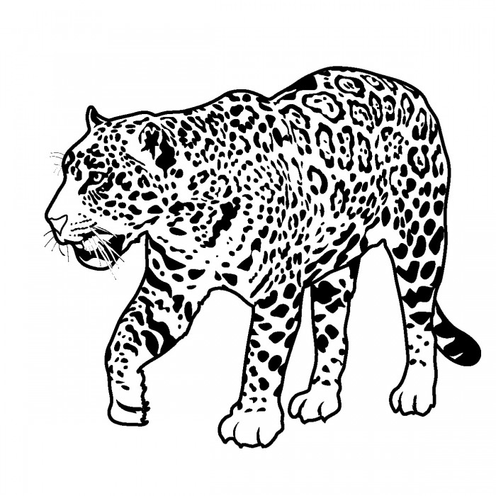 coloring pages jaguars - photo#14