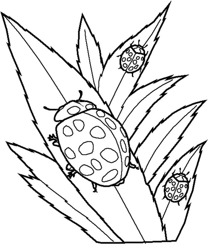 Coloring Pages Of Ladybugs on Ladybug Fun