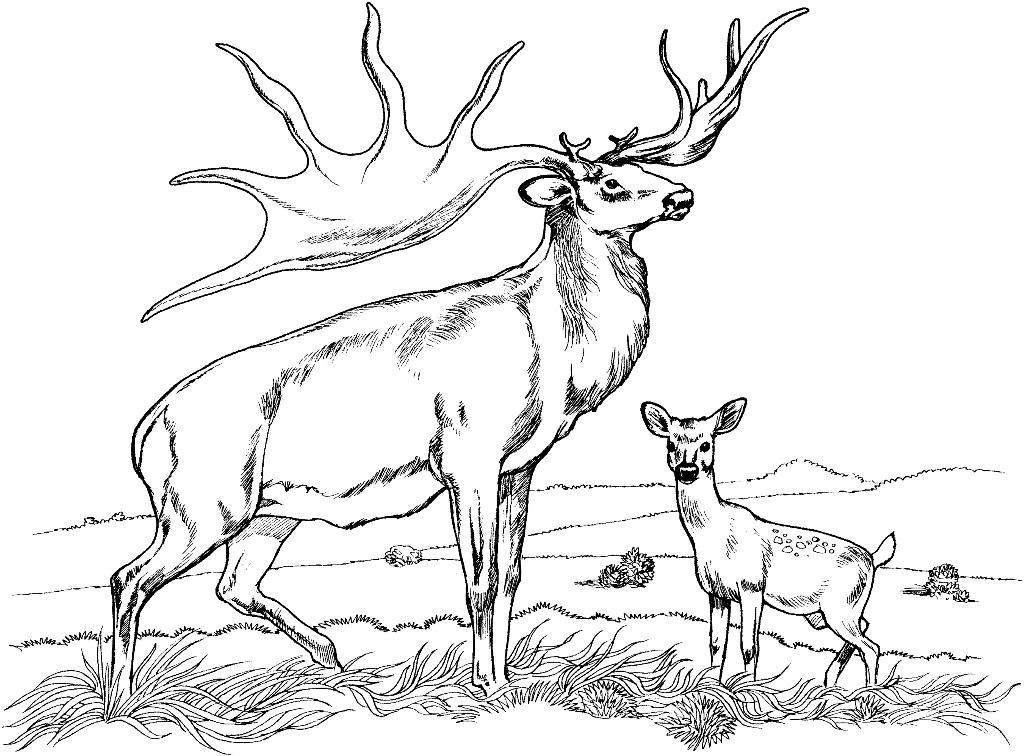 Browning Deer Head Heart Logo Sketch Coloring Page | Vinyl window ... | 756x1024