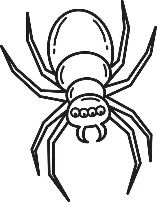 tarantule coloring pages - photo#20