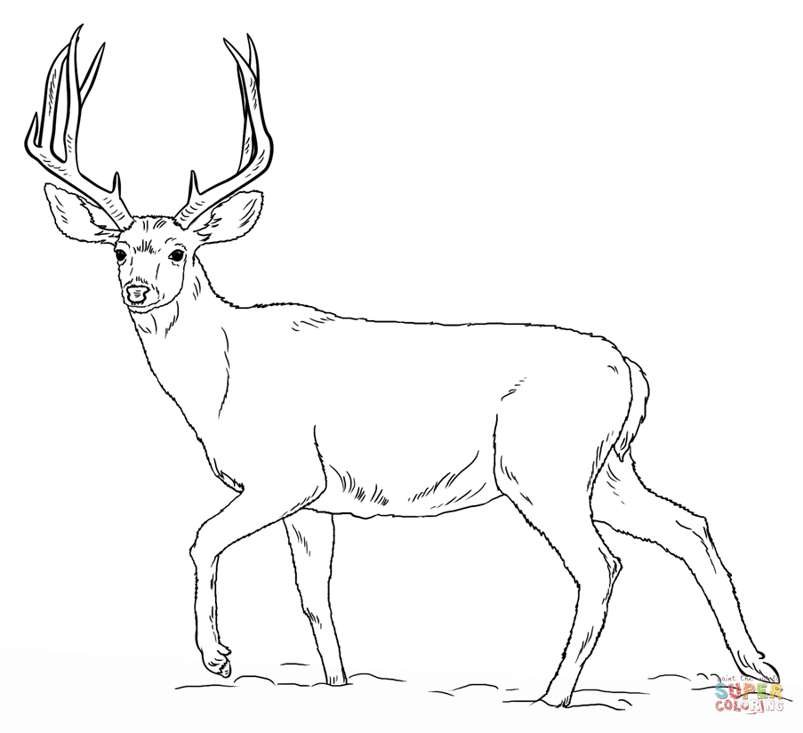 Hunting Coloring Page