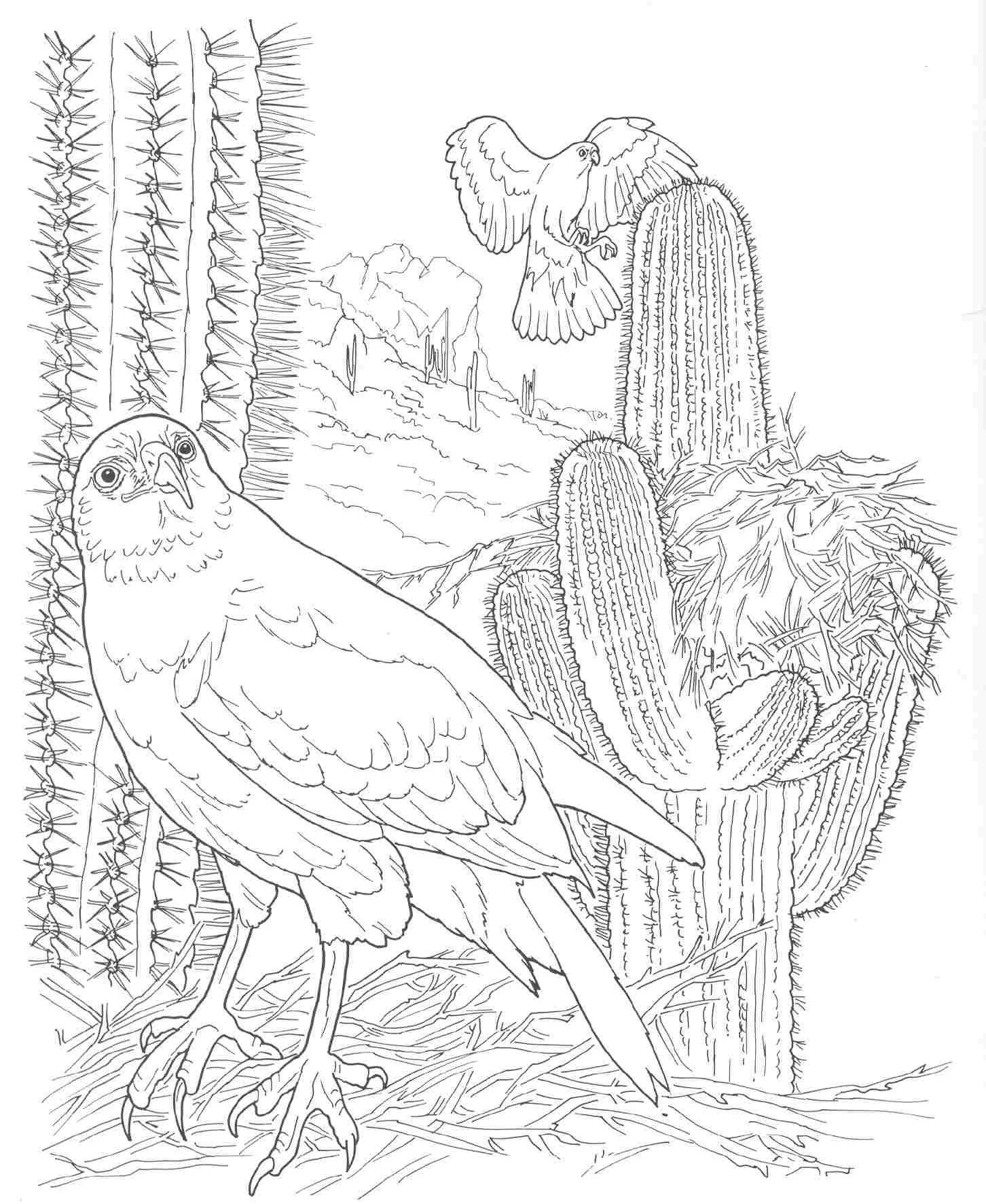 sonoran desert coloring pages high quality coloring pages