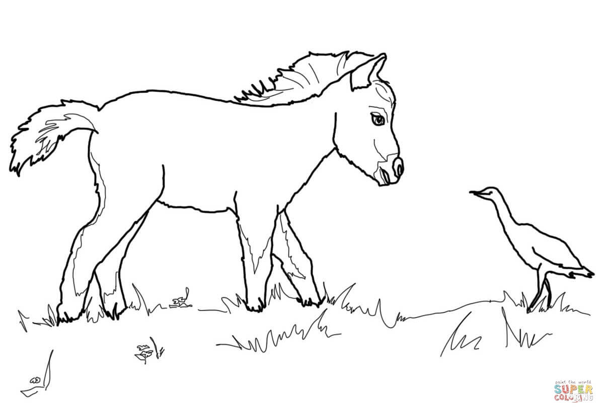 Miniature Horse Foal And Bird Coloring Page