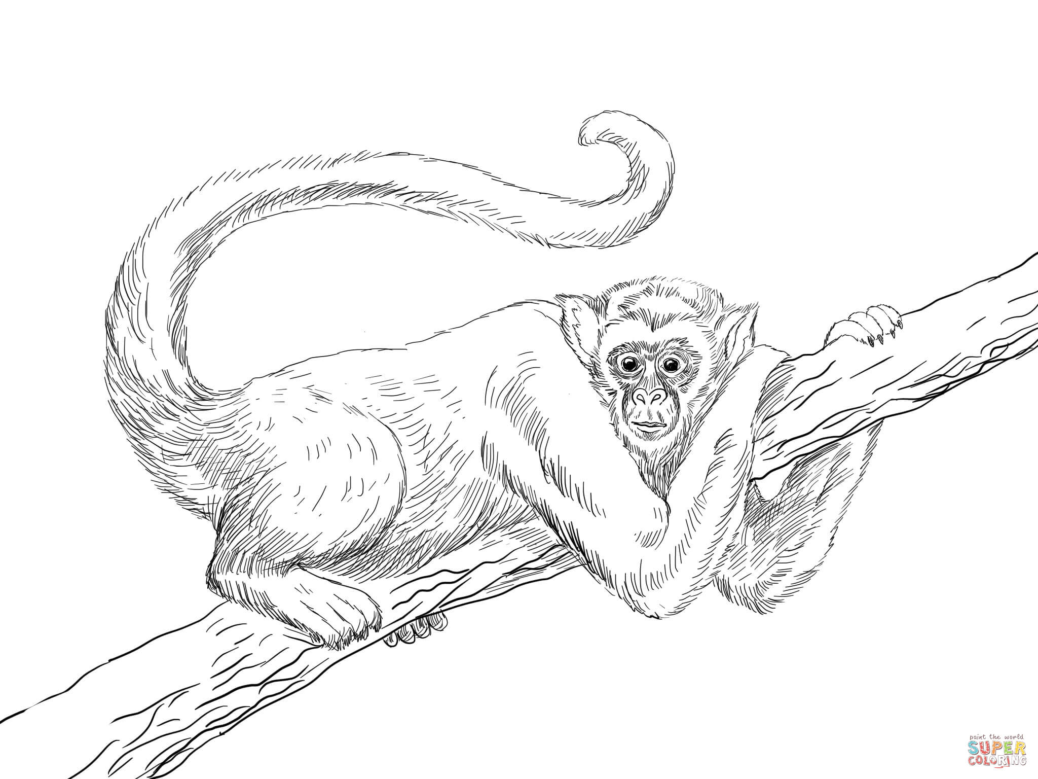 Realistic Monkey Coloring Pages - Coloring Home