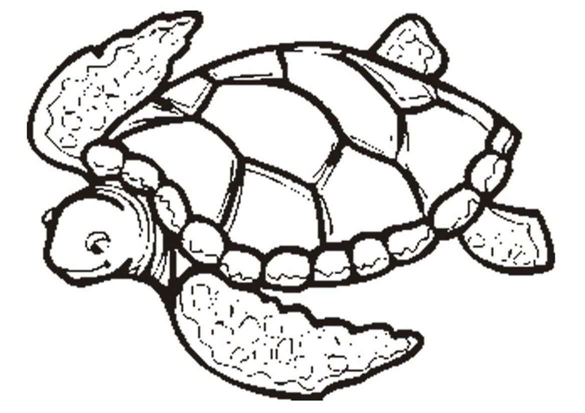 Tortoise Coloring Pages To Print
