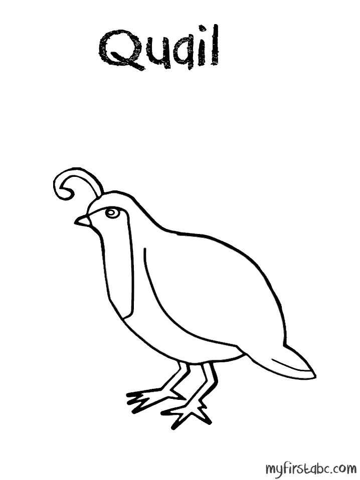 Quail Coloring Pages - Coloring Home