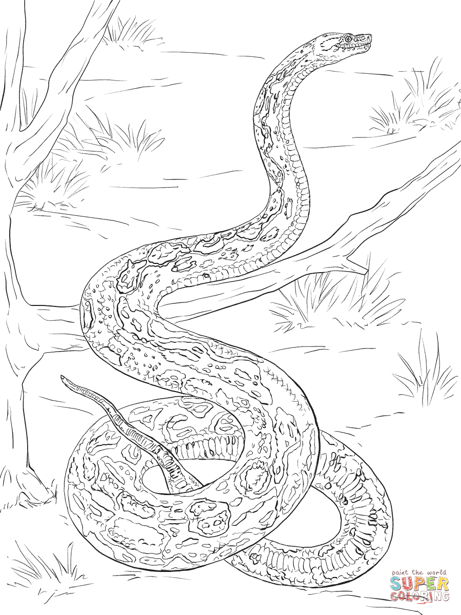 boa constrictor coloring pages free coloring pages coloring home