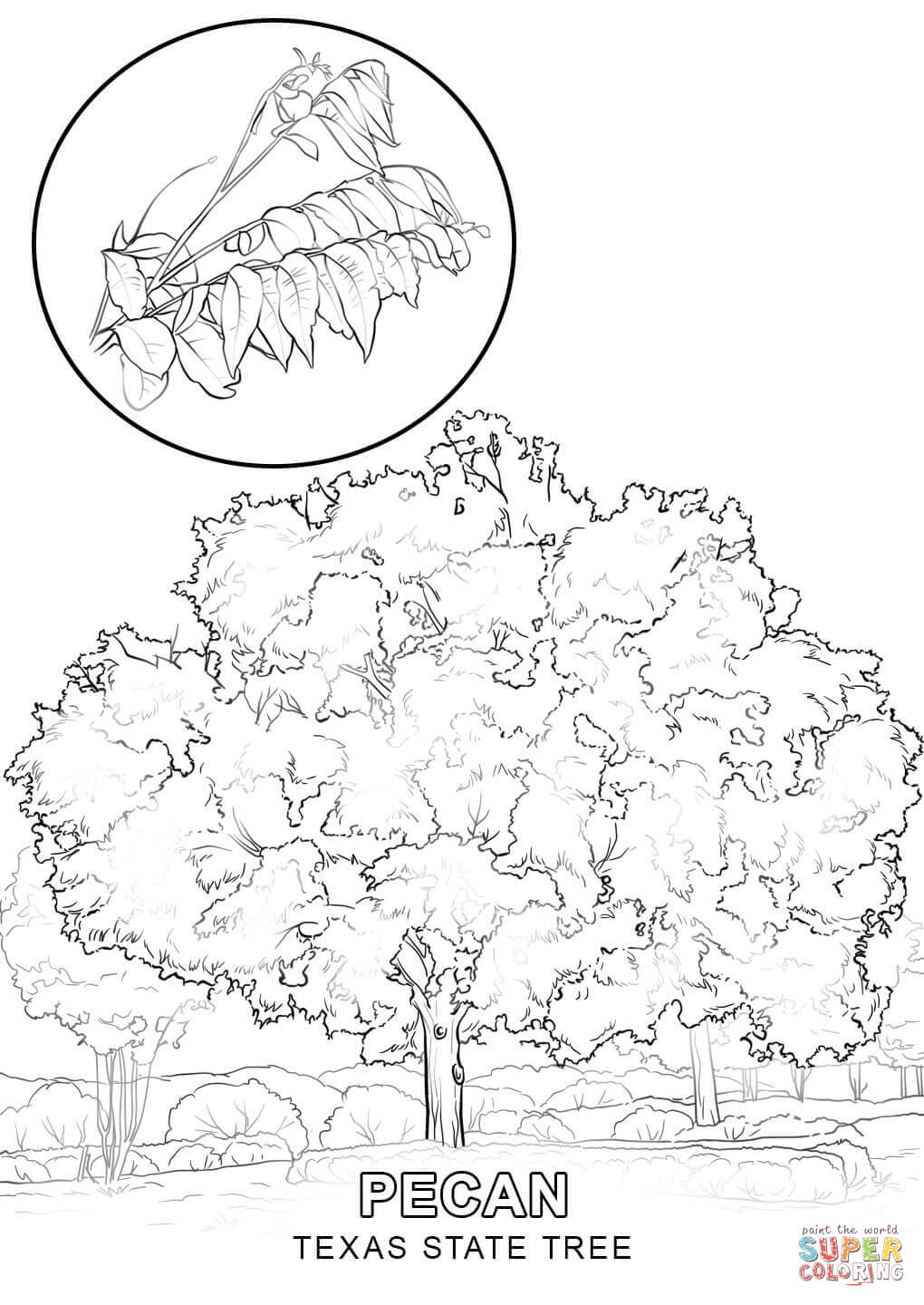 texas symbols coloring pages - photo#16