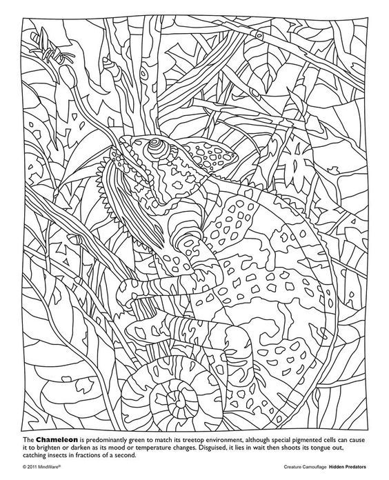 Animal Camouflage Coloring Pictures : Camouflage coloring pages home