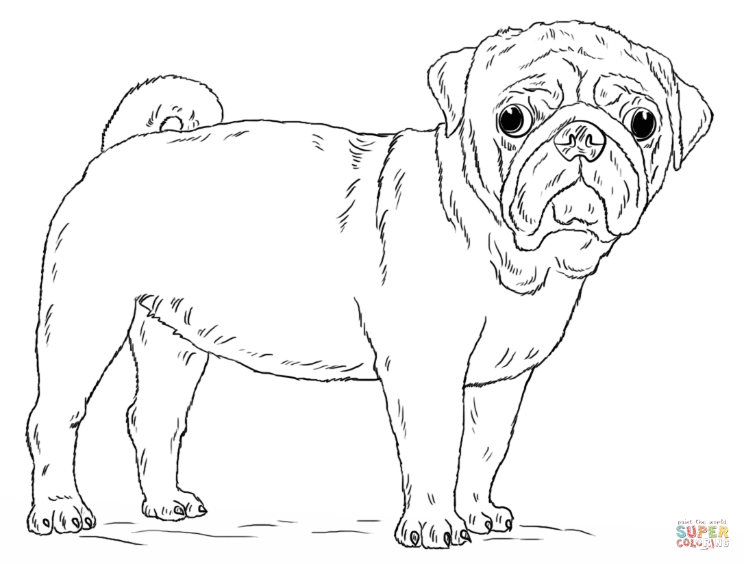 Cute Pug Dog coloring page | Free Printable Coloring Pages