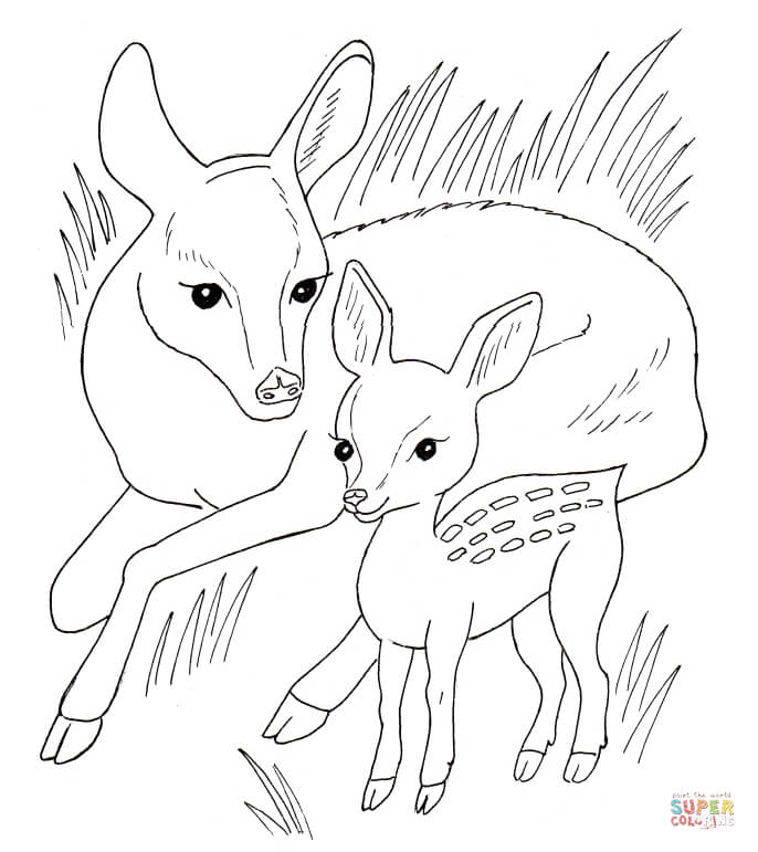 baby deer coloring page - coloring home